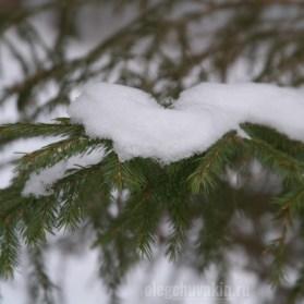 Снежок, снег, хвоя, ель, иголки, фото крупным планом