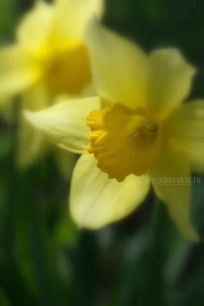 """Нарцисс, тень, галерея """"Жёлтое и красное"""""""