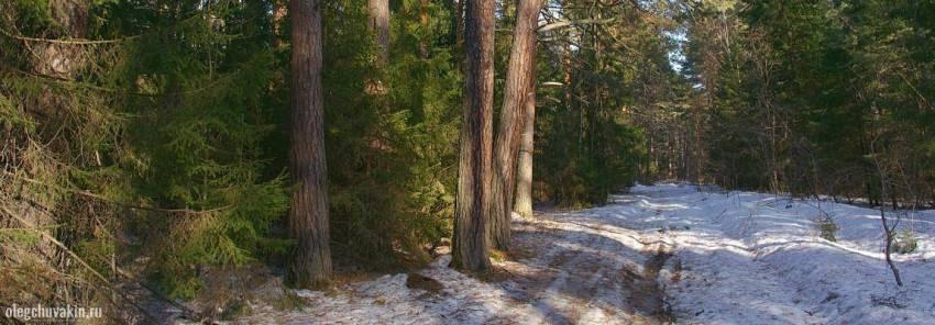 Апрельский лес, лес в апреле, снег, сосны, фото