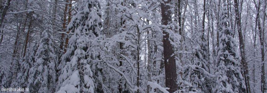 Зимний лес, фото смешанного леса