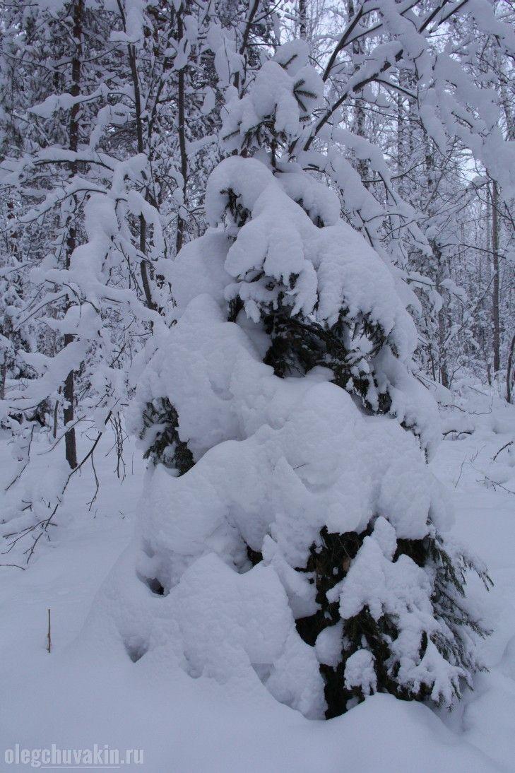 Ёлка в лесу, снег, сугробы, фото