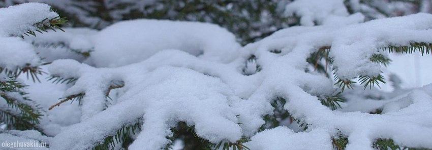 Снег, ветки, сосны, фото, Олег Чувакин, фантастический роман Третье желание