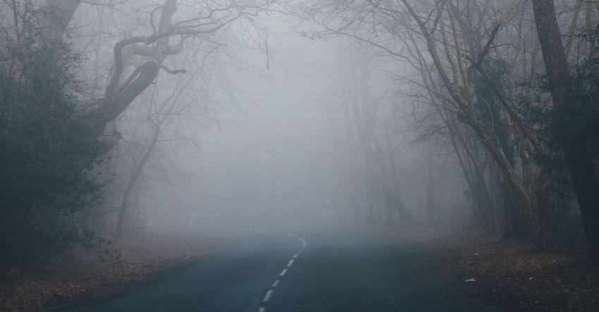 Трансформация души, Полина Фокина, рассказ, туман, форма жизни