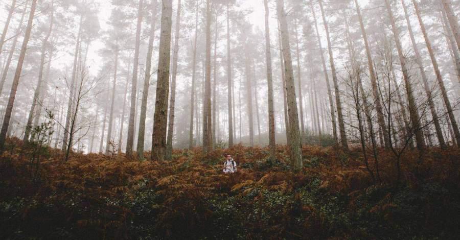 Лес, фото, шелест листьев, пение птиц, Александра Вэндом, фантастический рассказ о писателе