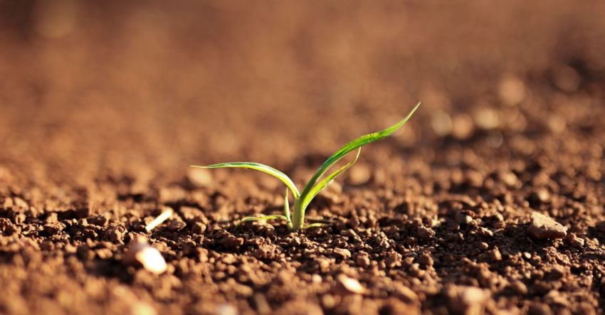 Весна, растение, всходы, земля, солнце, фото, иллюстрация, рассказ
