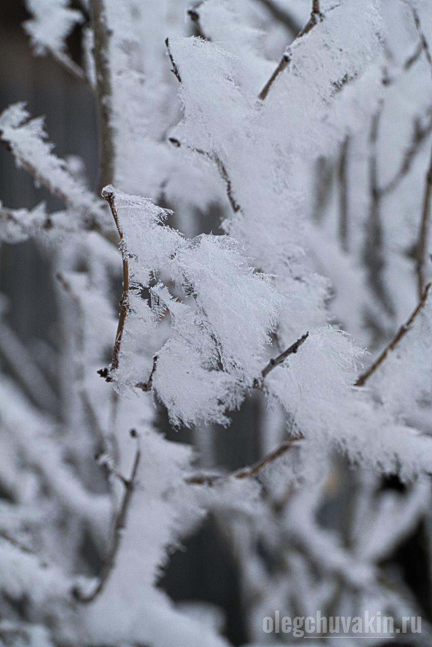 Иней, ветка, сирень, зима, фото