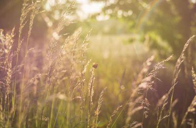 Луг, лето, бабочка, трава, чудо посреди зимы, летнее чудо от Деда Мороза