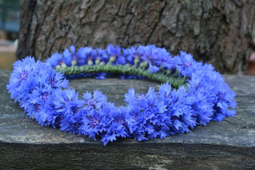 Васильки, венок, синие цветы, одиночество