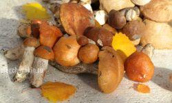 Красноголовики, грибы, мои любимые, фото