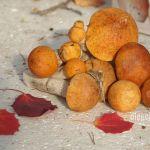 Красноголовики, подосиновики, осиновые листья, фото