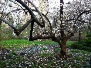 Árboles de abril en Central Park, Nueva York