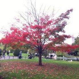 Árboles en otoño en Boston