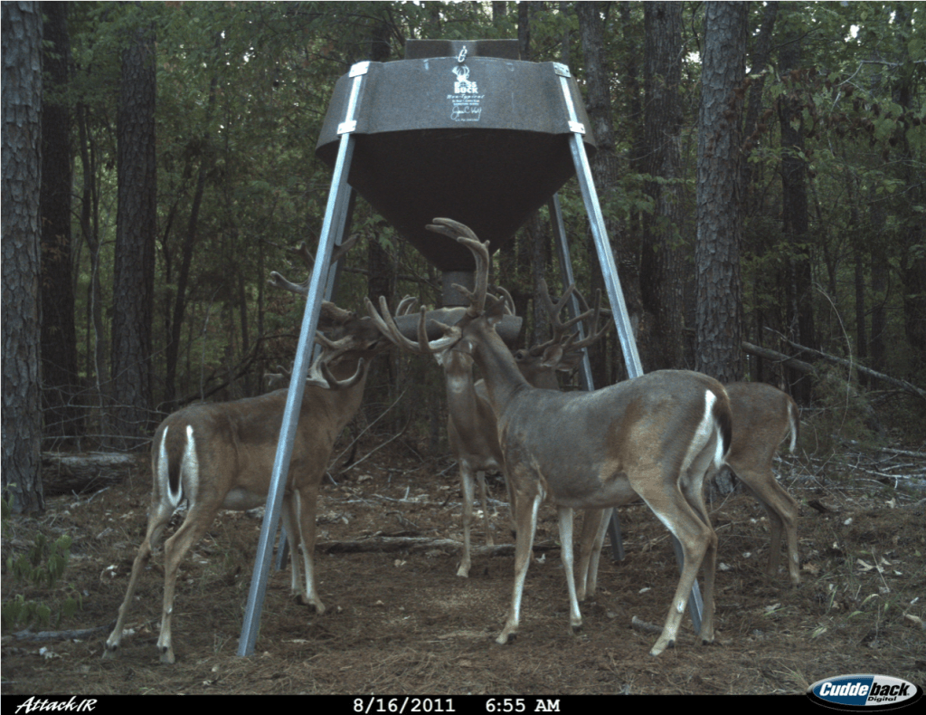 pro antler deer feed attraction with