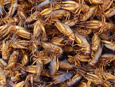 nutritious insects to eat