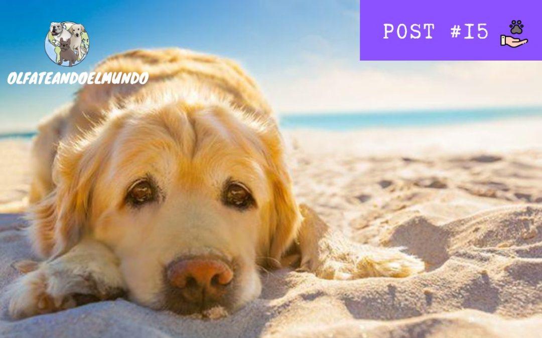 Los 7 problemas que debes evitar en verano si tienes un perro