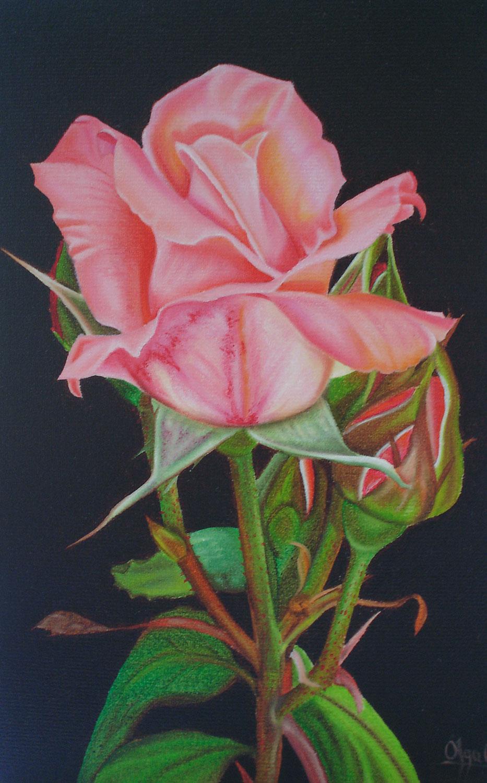 Urban Nature Pink Rose Print Exhibition by Olga Calado