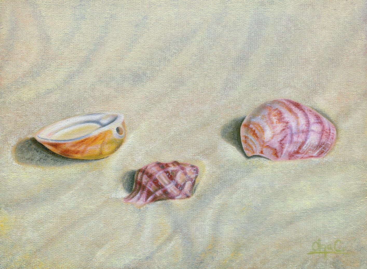 Little Shells on Dry Sand on the Beach