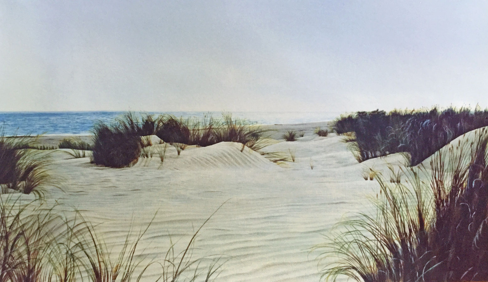 Dunes in Coto Doñana Winter