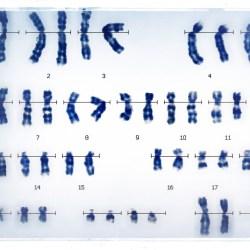 генетическое исследование