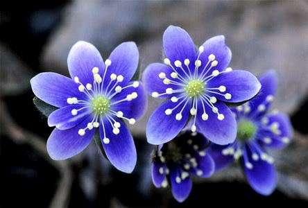 flori-de-primavara-sa-ti-incalzeasca-sufletul_d286421bec4a65