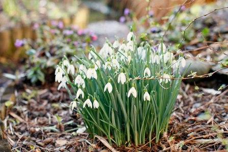 march garden flowers