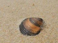 Curvy Stripes on the beach