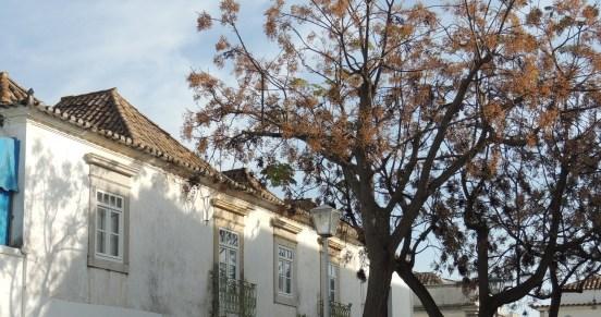 Tavira roof