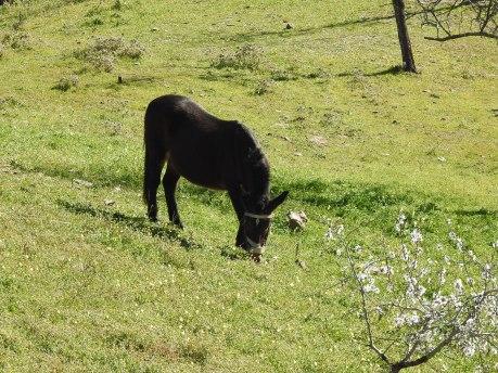Donkey in the field