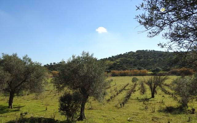 Valley farming