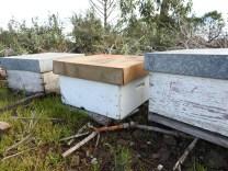 Bee hives close up