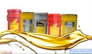 Distributor Oli Shell Argina Oil X 40