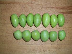 Aceituna picocuervo (8)