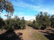 Finca Sanjuan Malo SL. Castellar (Jaén)