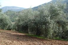 Sierra de Segura. (Jaén) Mias.Finca 3. Marzo.3