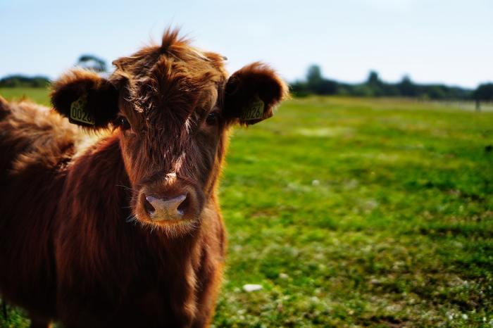 Produits laitiers et bonne Santé