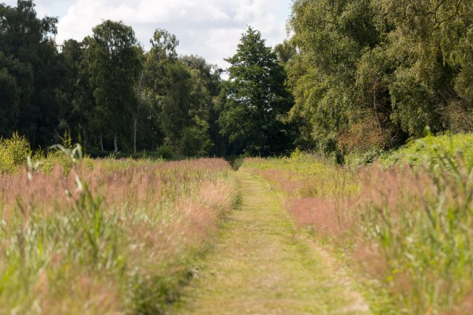 One of the mown paths, gently curving round a meadow and back into the woodland. Photos from Holme Fen on July 14th 2016.