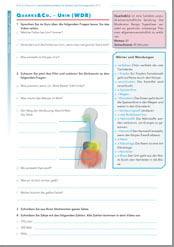 Arbeitsblatt: Wie macht der Körper Urin?