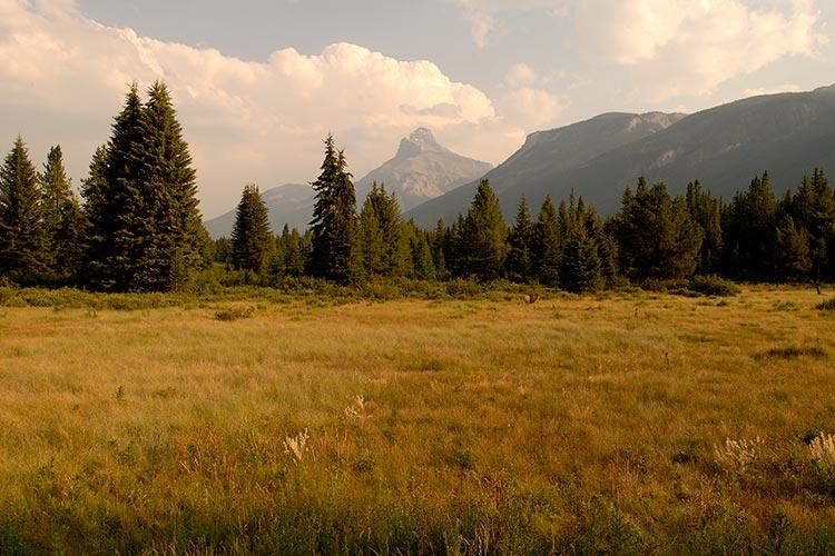 Grassy meadow, Banff National Park