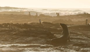 galapagos islands sunset seals cormorants