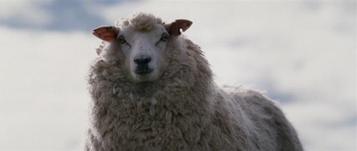 black-sheep_01