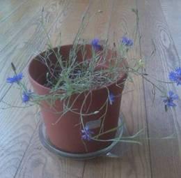 This week in full bloom!