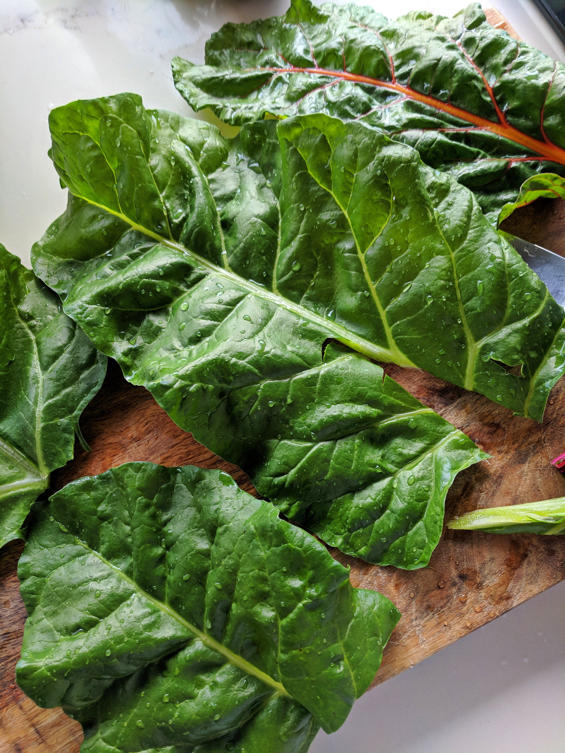 Fresh Rainbow Silverbeet ( Chard ) used to make Dolmades