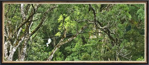 tree-top-2011-guest