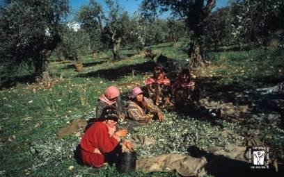 olive-med-05s