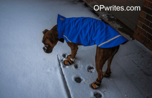 Protecting your dogs paws in the winter