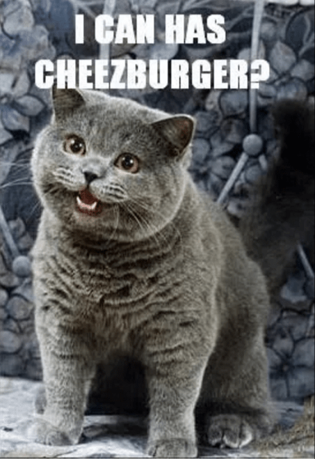 I can has cheezeburger?