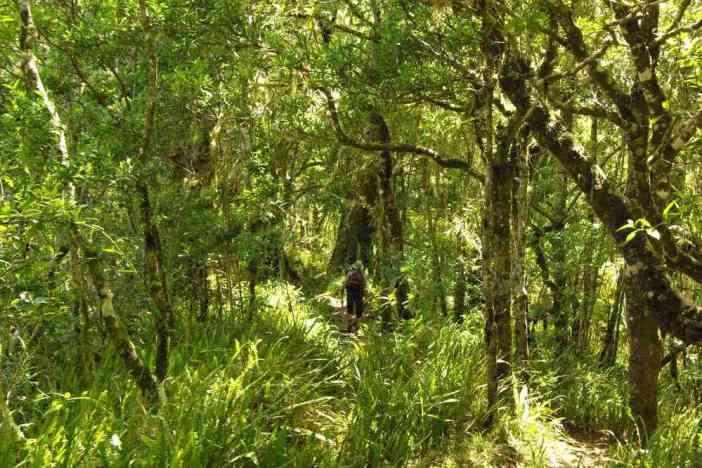 Marche en forêt sur les pentes inférieures du Rinjani, le 13 juillet 2007