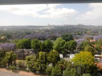 From Standard Bank building, see how the purple trees stand out