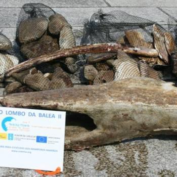 Galicia no lombo da balea II