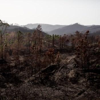 49.171 hectáreas  de superficie queimada durante a vaga de lumes